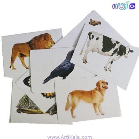 فلش کارت بزرگ دید آموز حیوانات